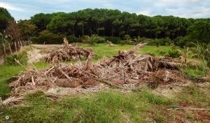 Soverato località Corvo. Rifiuti verdi ammassati in area non autorizzata.